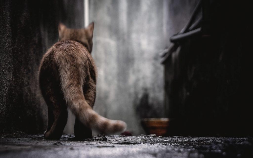 long tail keyword research